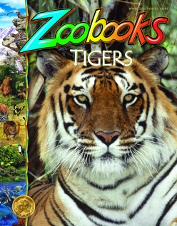 zoobooks-tigers