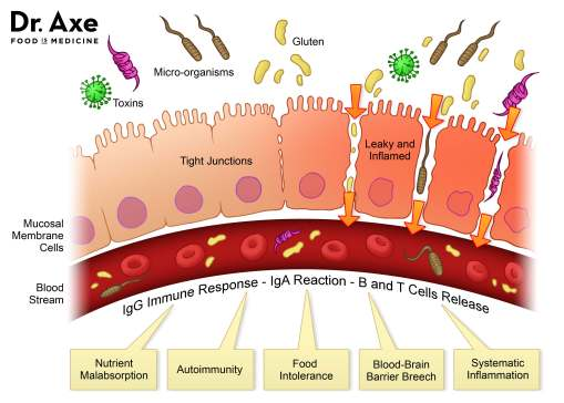 dr axe leaky gut junctions